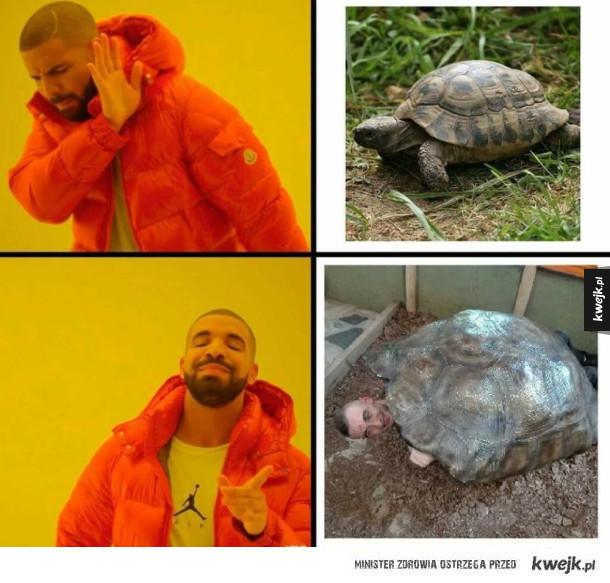 I to jest żółw