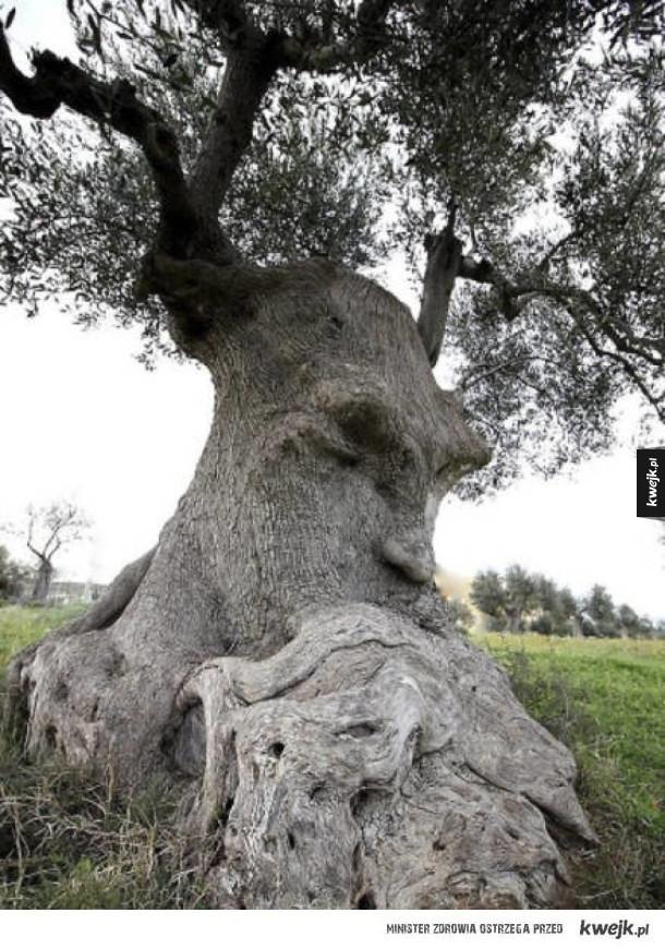 (Nie)zwykłe drzewa