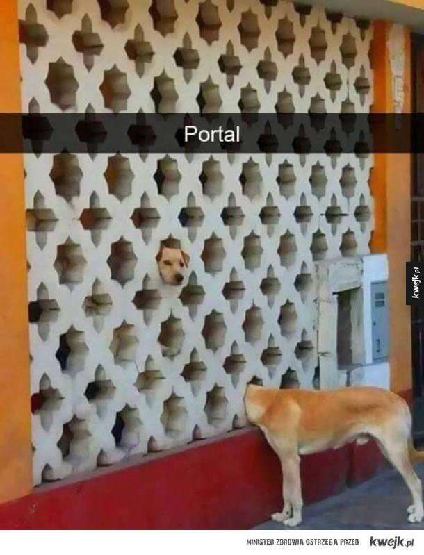 Portal do piesełolandii