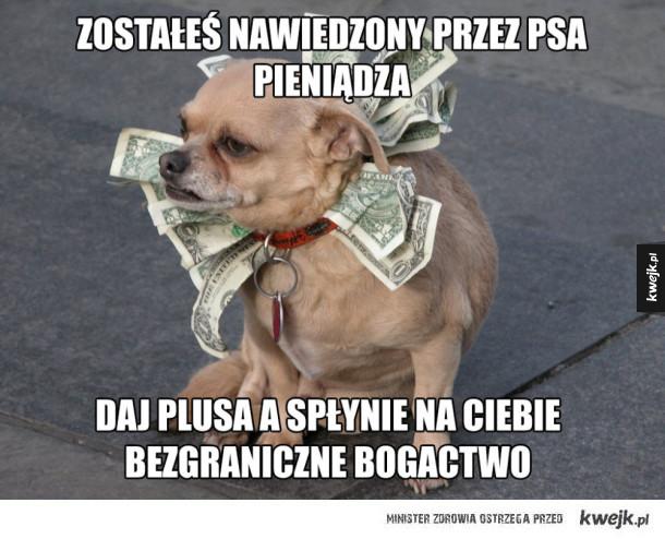 Pies Pieniądz