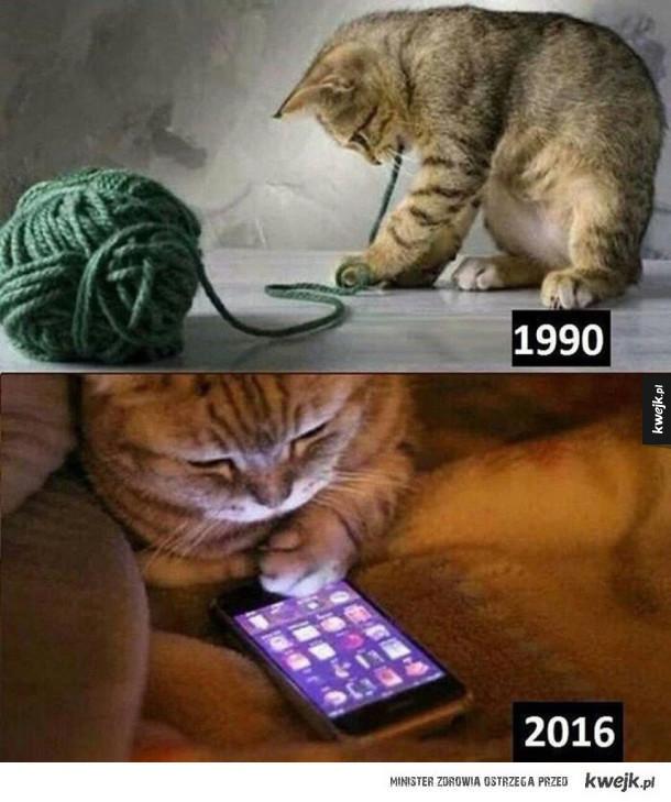 Co się dzieje z tymi kotami