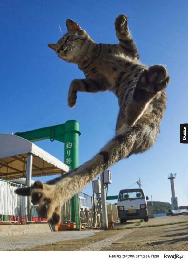 Koty to tak naprawdę ninja i te zdjęcia tego dowodzą