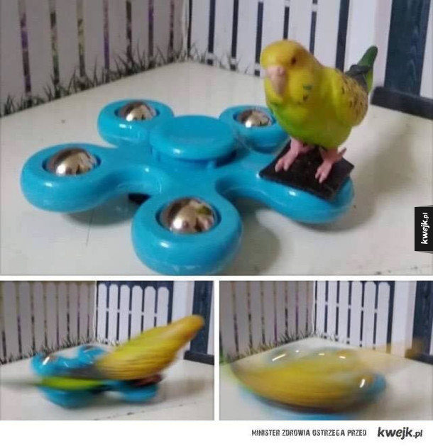Papug spinner