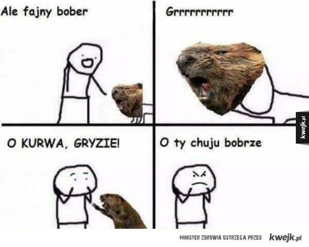 O Ty bobrze!