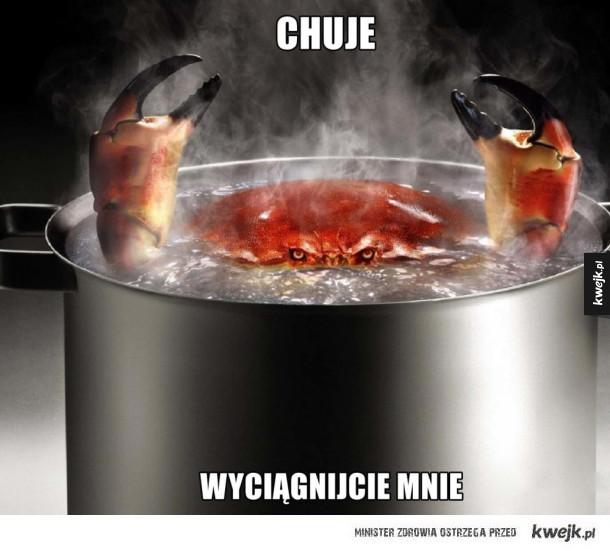 Gotujemy kraba