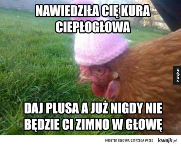 Kura Ci pomoże
