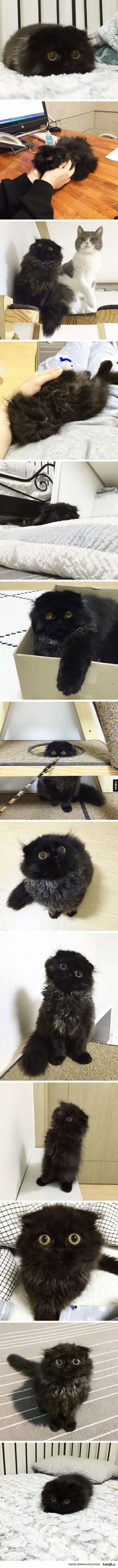 Kot z wielkimi oczami