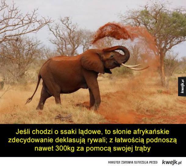 Najsilniejsze zwierzęta na Ziemi