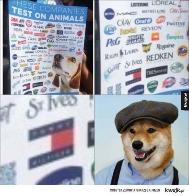 Psy testujące produkty na zwierzętach