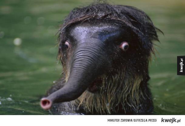 Nie wszystkie zwierzęta są urocze i fotogeniczne