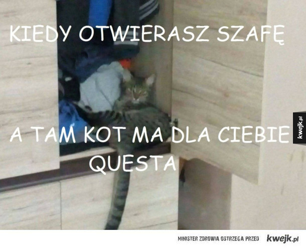 Kot ma zadanie