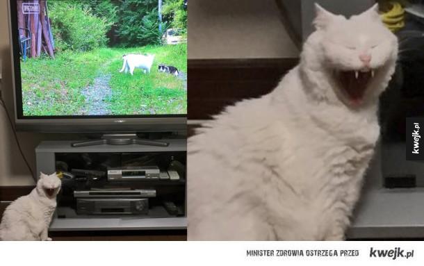 Niefotogeniczne kotki
