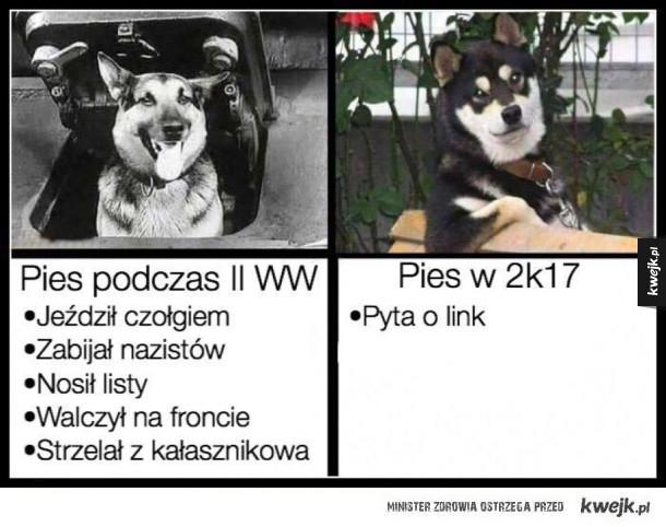 Psy tylko łase na linki