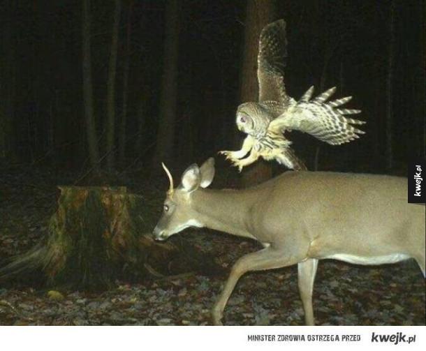 Dzikie zwierzęta w ukrytej kamerze