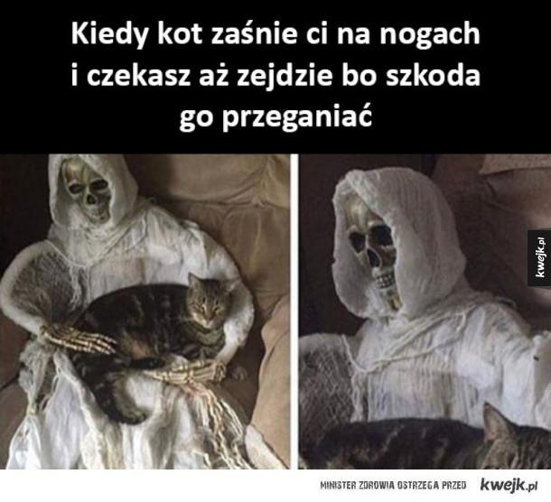 Szkoda koteła