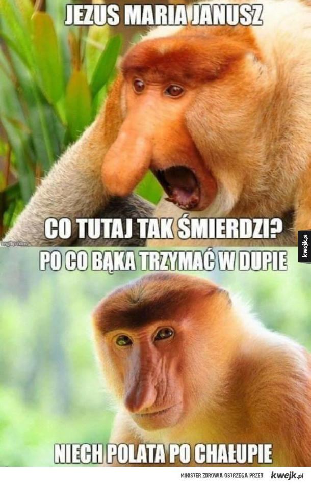 Janusz no