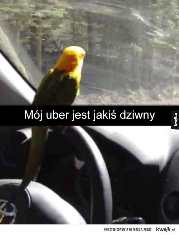 Mój uber