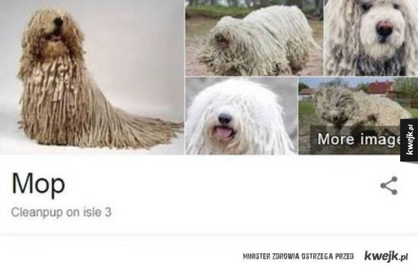 Dziwny mop