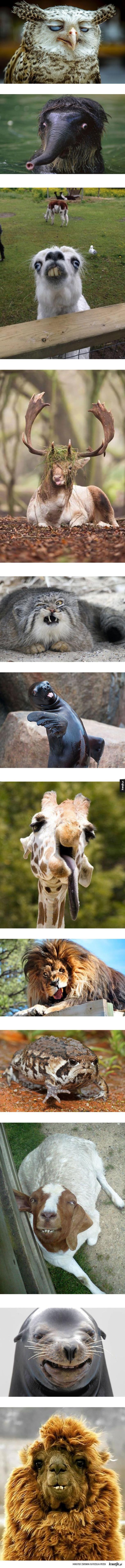 Zwierzęta są piękne