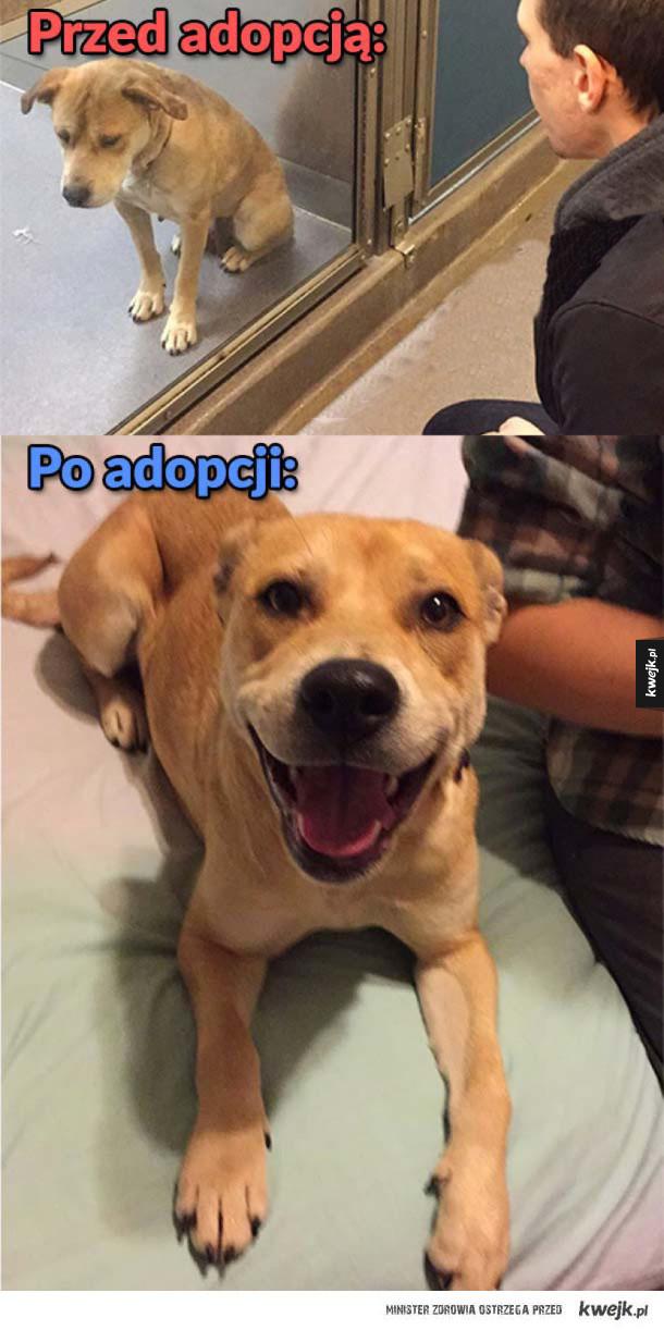 Jeśli zastanawiasz się czy warto adoptować psa ze schroniska