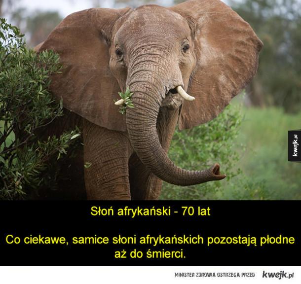 Długowieczne i nieśmiertelne (!) zwierzęta