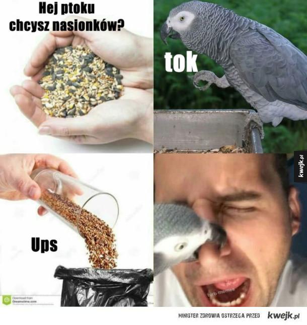 Papug wściegły whoy agresywny