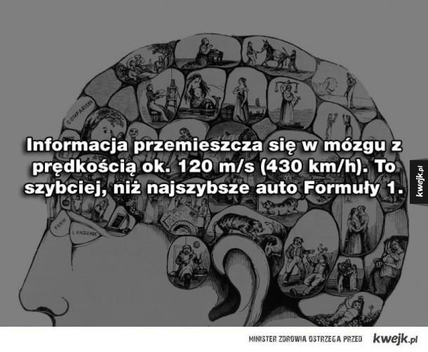 20 ciekawostek o mózgu
