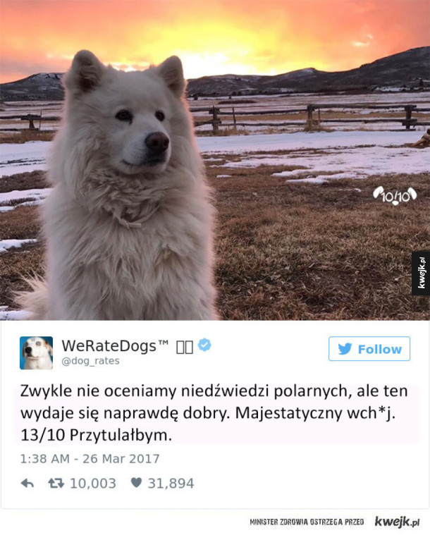 WeRateDogs ocenia tylko psy, a nie inne zwierzęta!