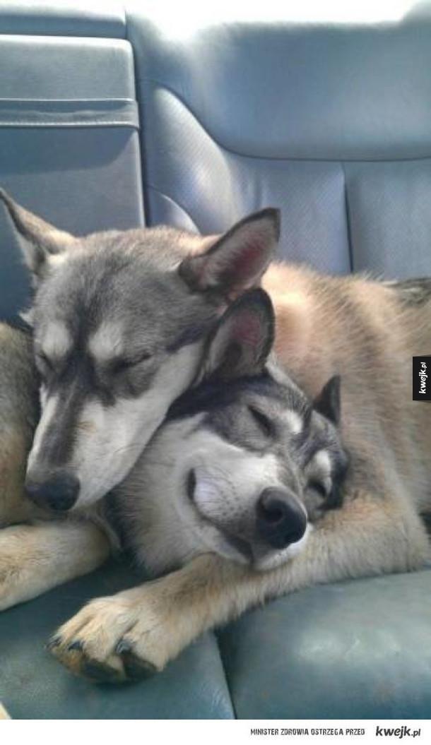 Nowy cel w życiu: osiągnąć poziom komfortu tych zwierzaków