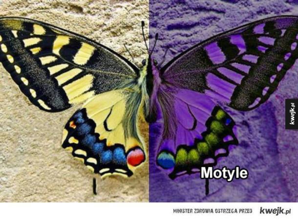 Jak widzą świat różne zwierzęta, w porównaniu z człowiekiem