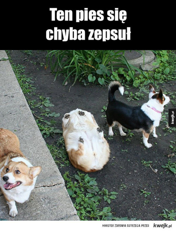 Popsuty Pies