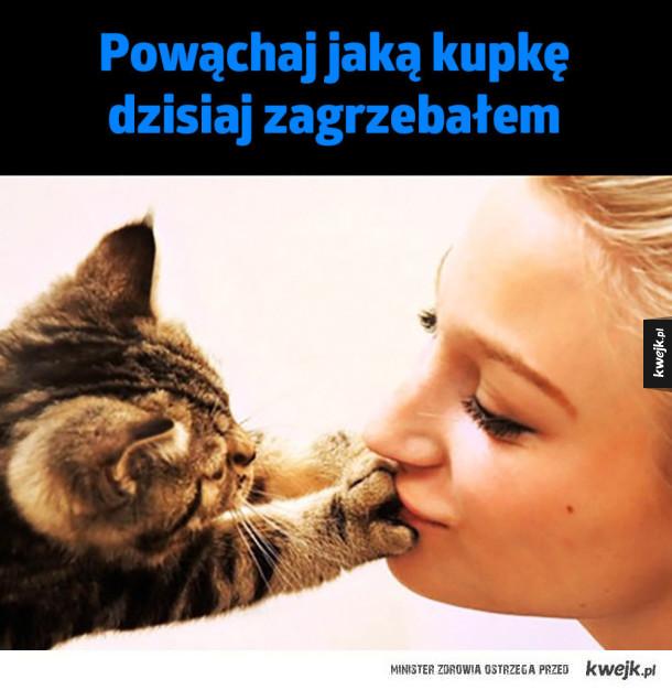 Kochany kociak