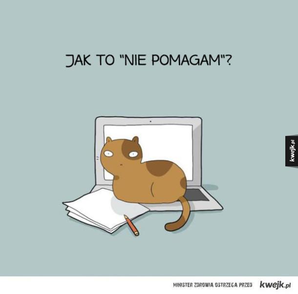 Życie z kotem takie jest