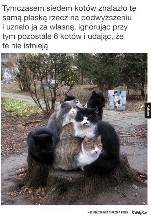 Kocie śmieszki