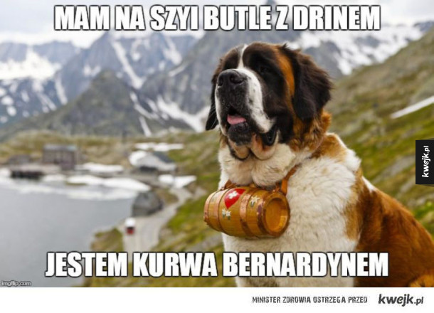 Bernardyn xD