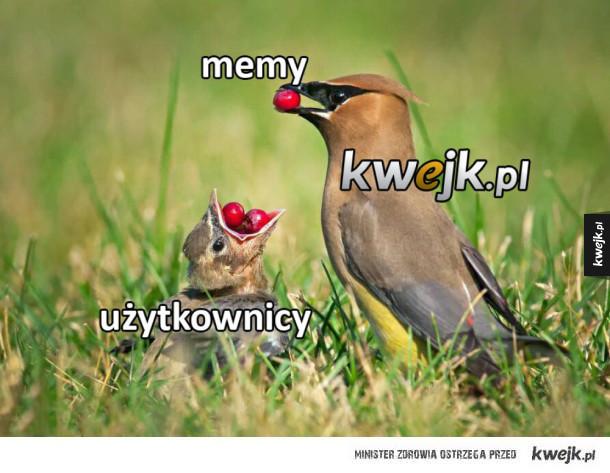 Kwejk daje memy