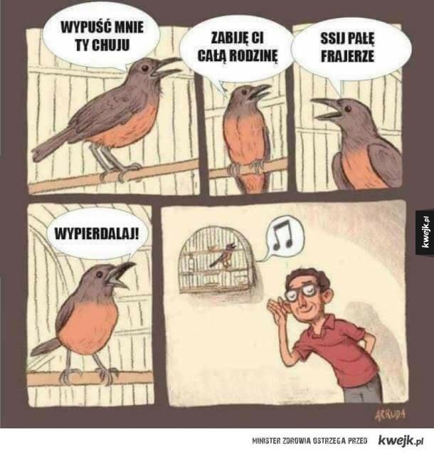 Odgłosy natury