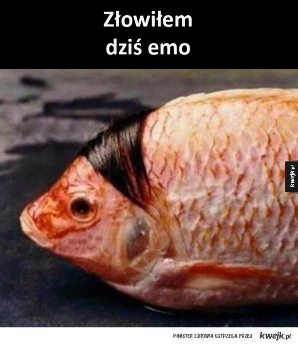 Emo rybka