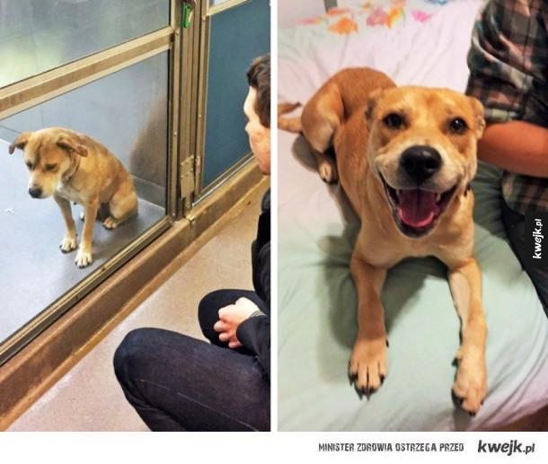 Zdjęcia psów przed adopcją i po to najlepsze metamorfozy
