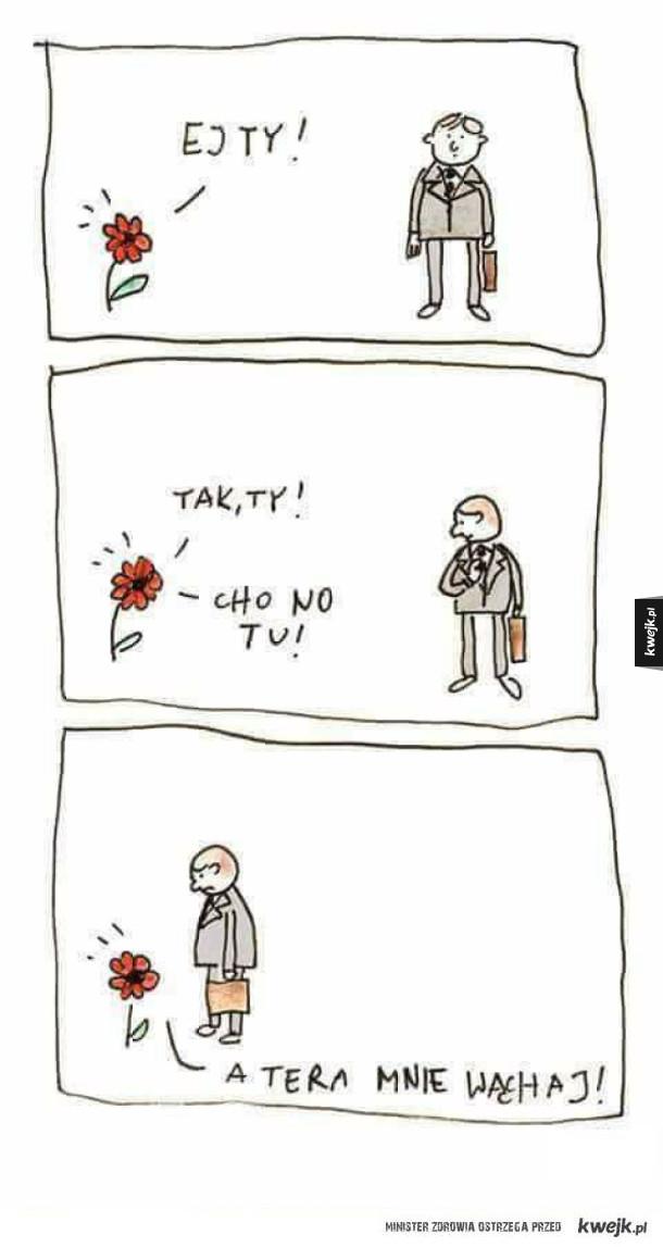 Cho no tu