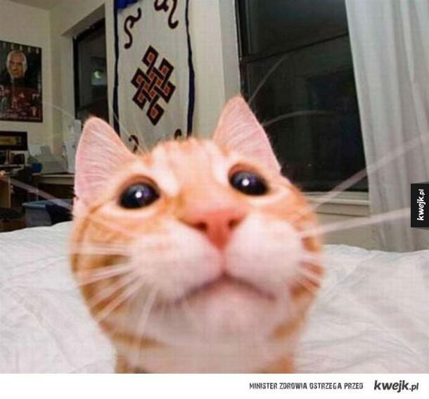 Kocie selfie