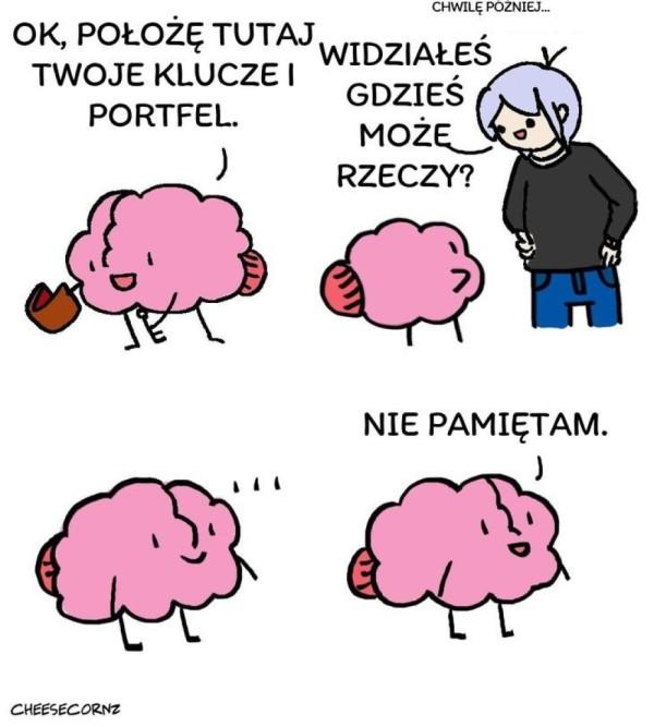 Typowy mózg