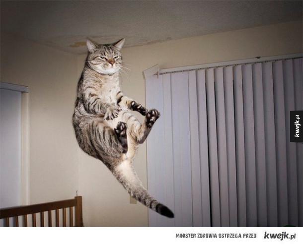 Koty, które wzywa statek matka