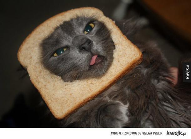 Koty w chlebie