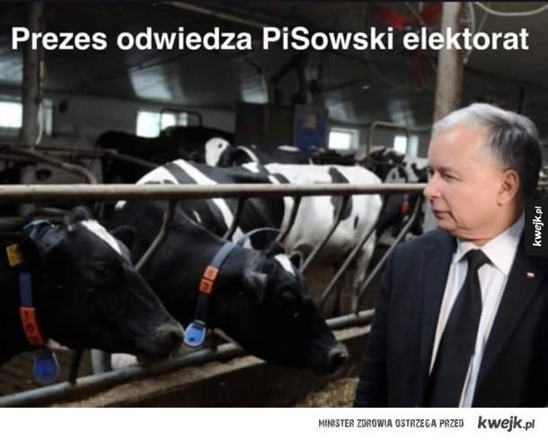 Elektorat partii rządzącej
