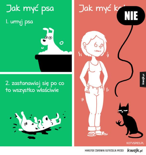 Jak myć kota