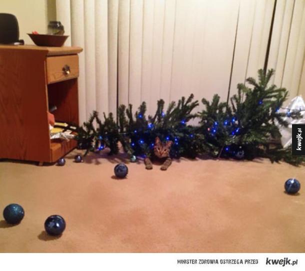 Psy i koty kontra dekoracje świąteczne