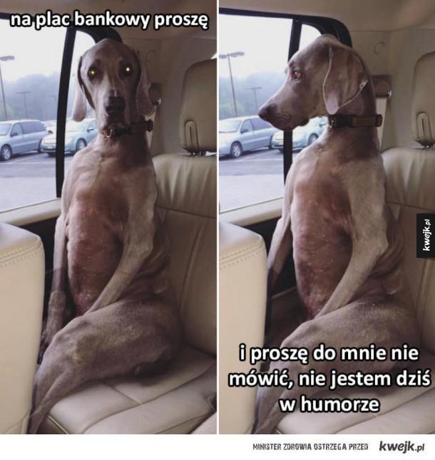 Trudny pasażer