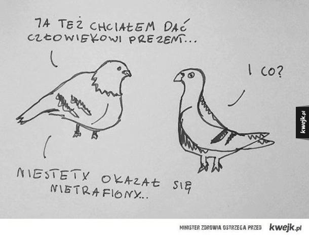 O czym rozmawiają gołębie