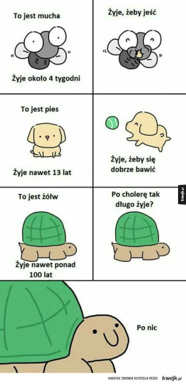 Po co żyje żółw